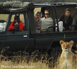 Tourists watch wildlife